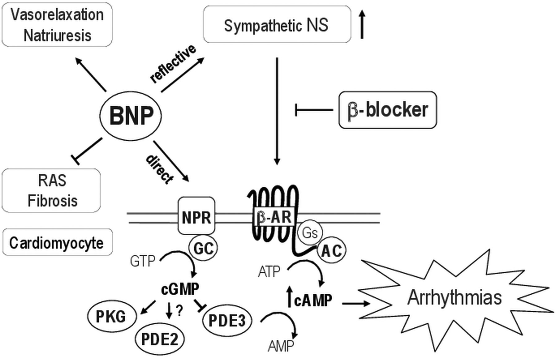 The Janus Face Of Bnp Therapy In Chronic Heart Failure Beneficial Figure1 Cell Phone Jammer Circuit Diagram Download Figure Open New Tab Powerpoint 1 Schematic