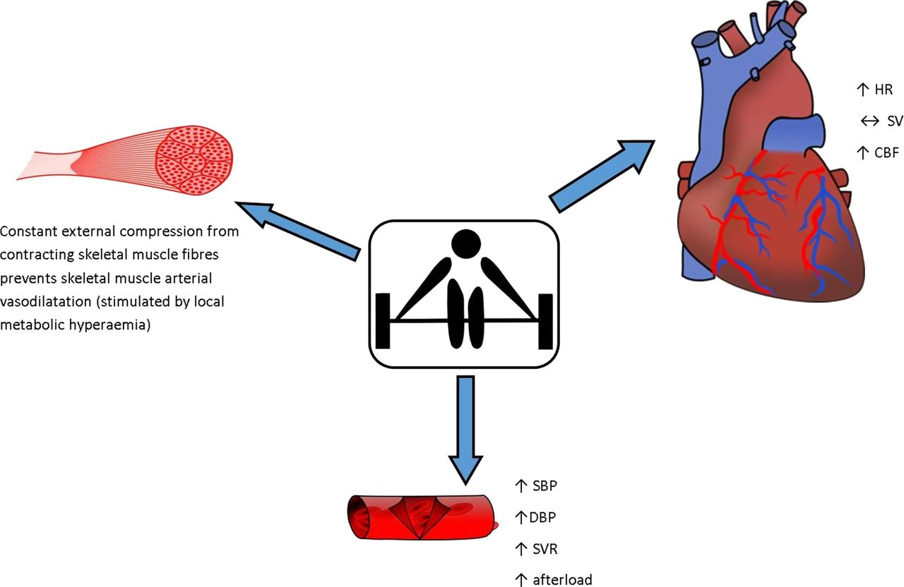 an analysis of effects of exercise on a human heart rate Effects of aerobic training on heart rate sectional analysis does not allow us to conclude that training effects on exercise-hr.