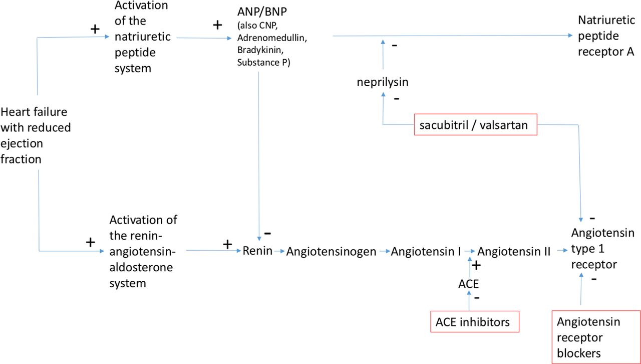 the neprilysin pathway in heart failure  a review and