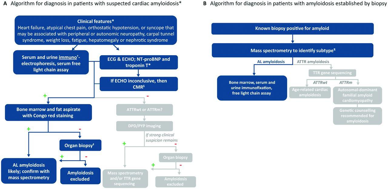 Light-chain cardiac amyloidosis: strategies to promote