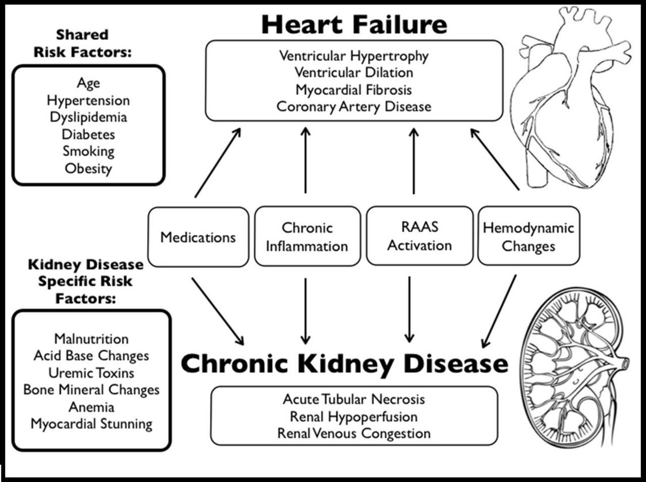 Heart Failure In Patients With Kidney Disease Heart