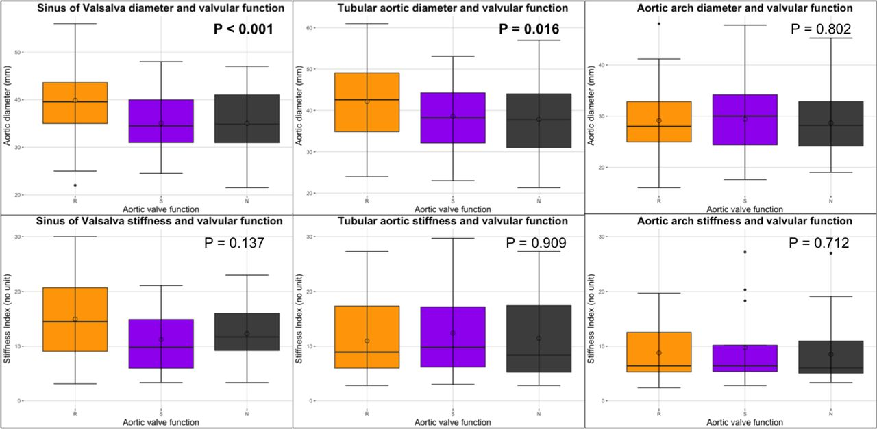 Segmental Aortic Stiffness In Patients With Bicuspid Aortic Valve