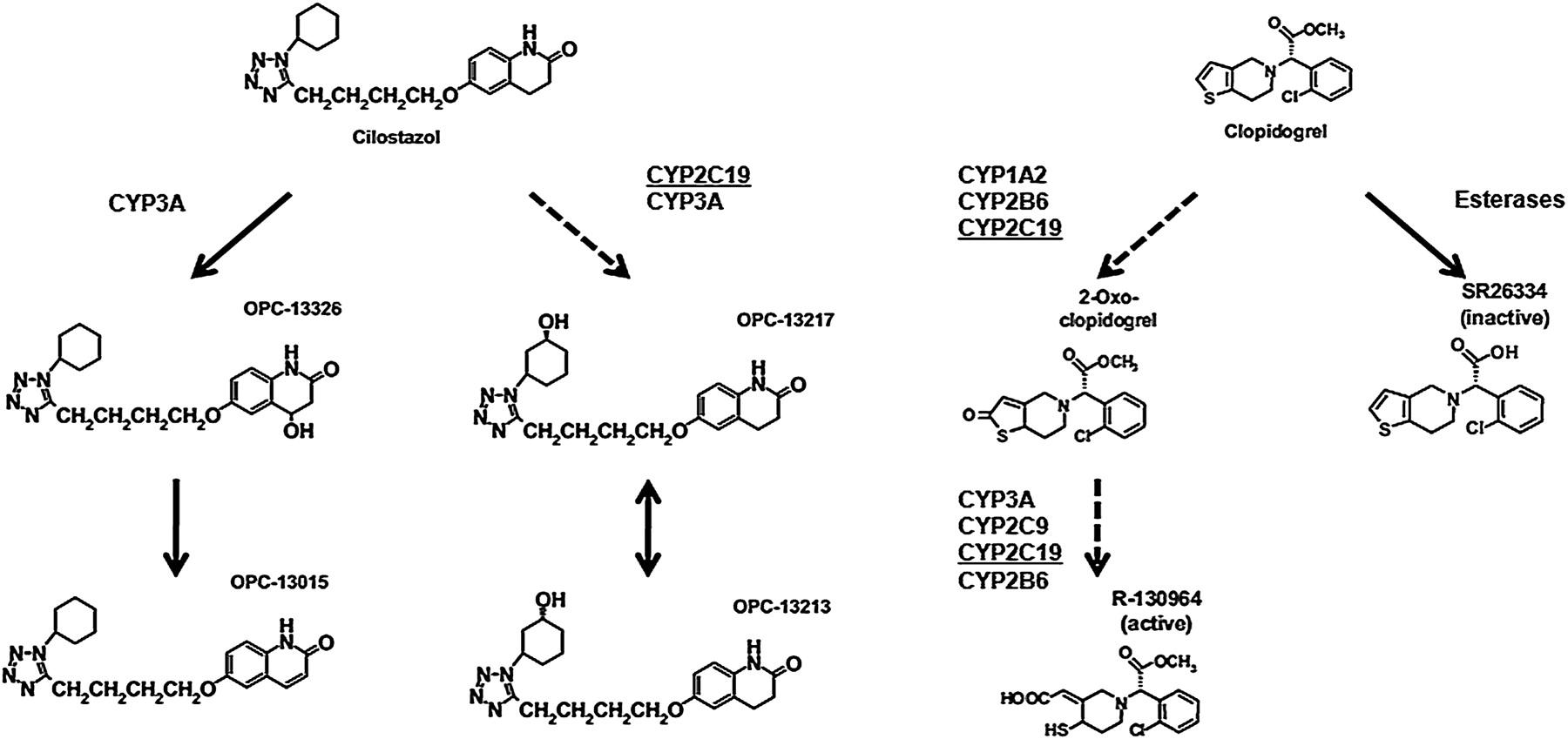 Cilostazol And Plavix