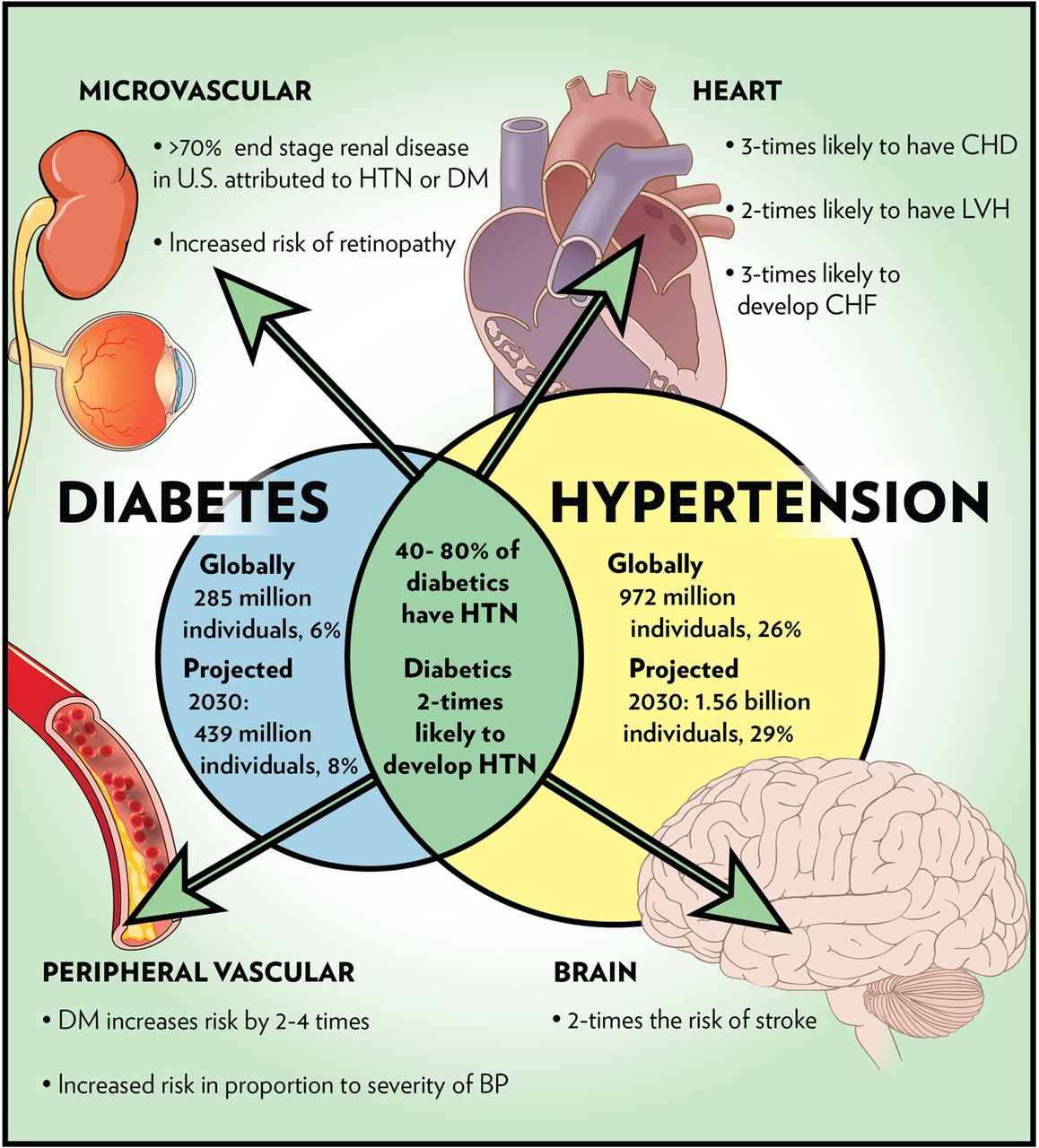 Controlling Hypertension in Patients with Diabetes
