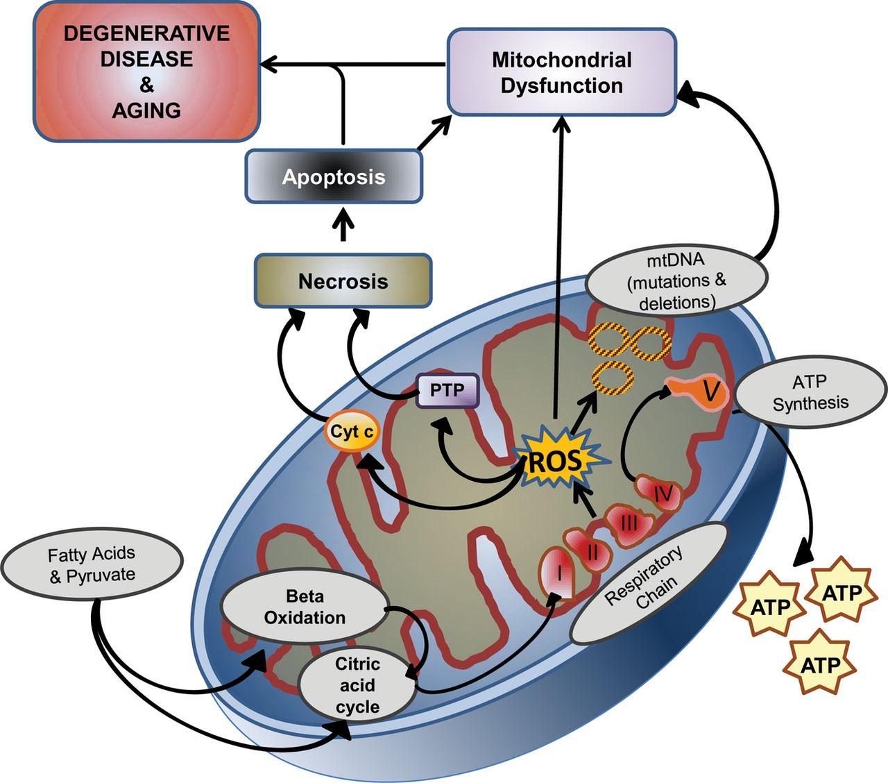 Accutane Degenerative Disease