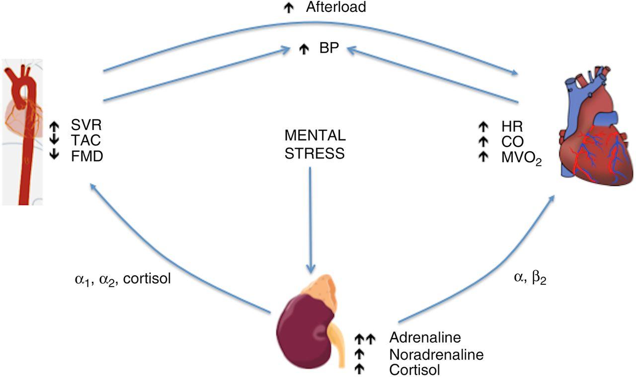 stress cortisol gewichtszunahme