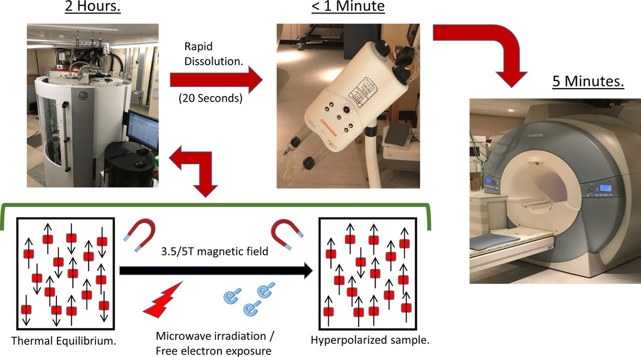 Hyperpolarised Magnetic Resonance For In Vivo Real Time Metabolic How To Build Signal Tracer And Injector Download Figure