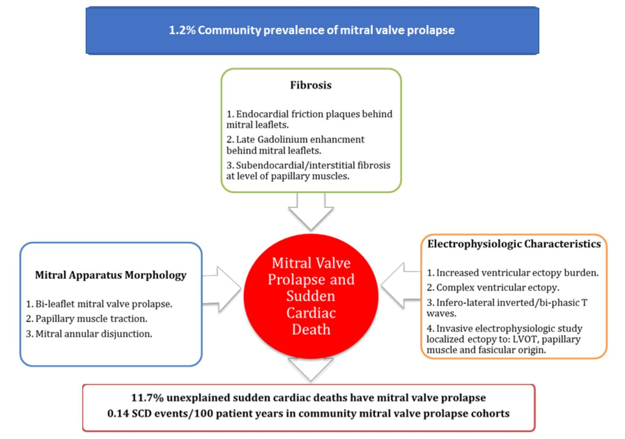 Mitral Valve Prolapse And Sudden Cardiac Death A Systematic Review